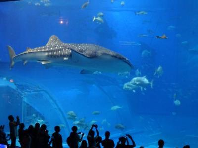JALどこかにマイルで行く沖縄の旅【1日目】美ら海水族館