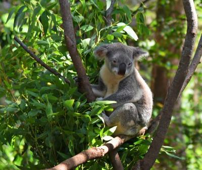 家族と一緒にオーストラリア旅行2018(6)7日目-ゴールドコースト其の3(カランバン・ワイルドライフ・サンクチュアリ他)