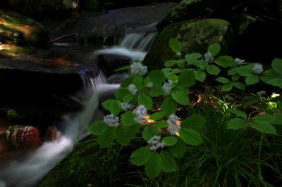 ◆花咲く東野の清流・初夏の候