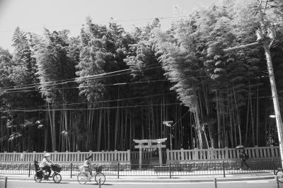 Welcome To Dark Side Of Japan—街の中の禁足地、八幡の藪知らず(千葉県市川市)
