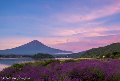 2018年山中湖ロッジ滞在記(2)6、7月編:今回も花と富士山を撮り歩く