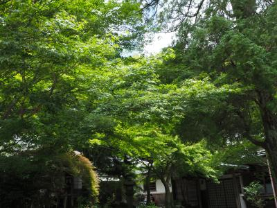 覚園寺 鎌倉の中でも素晴らしい緑の中を拝観 季節毎に訪れたい! 別格の寺院!!!!