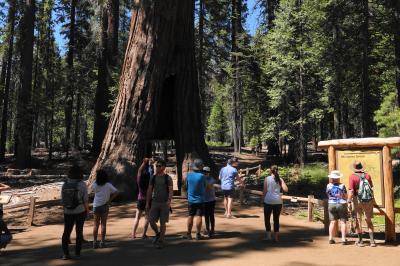 3)肥満体御用達? とっても楽チン Yosemite Grand Tour 乗っているだけで主な観光名所が見られます