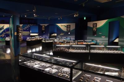 伊豆大島旅行記 観光編 その3 レンタサイクルで貝の博物館へ