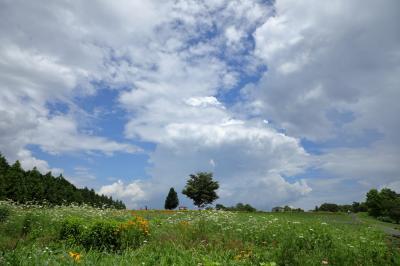 夏の高原 ~メナード青山リゾート~
