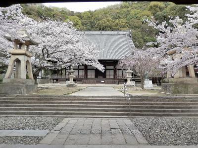 サクラ満開 春爛漫の山陽路 その7 竹原(後半)