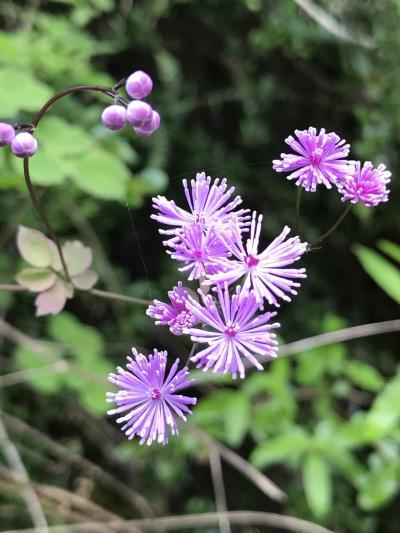 九寨溝の木道から花と水を賞でる