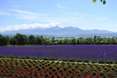 北海道旅行2日目 富良野