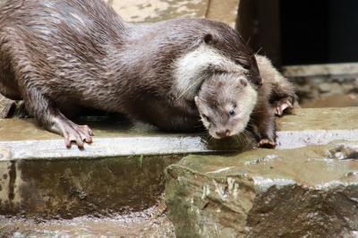 海外旅行前日に智光山公園こども動物園の動物たちとふれあう