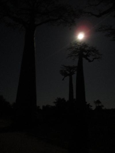 日の出前のバオバブ並木@マダガスカル最終日