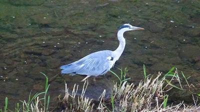 早朝散歩 宝塚市安倉上の池 下巻。