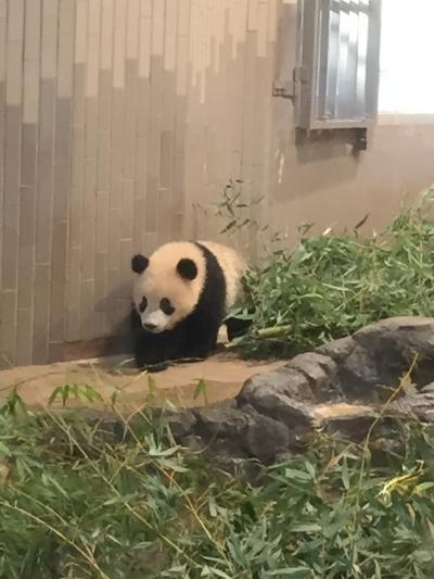 シャンシャンに逢いに上野動物園へ行ってきました!