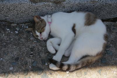 福岡旅行記その2 猫の島、あいのしま