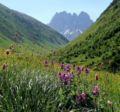 団塊夫婦5回目の世界一周絶景の旅―ジョージア編(2)ジョージアのドロミテ・お花畑が広がるジュタへ