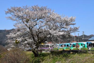 三江線の引退を祝福する菜の花と桜 2018 ~川戸・風の国~(島根)