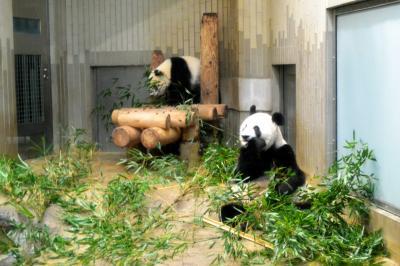 初パンダ。シャンシャンに会ってきました。上野動物園