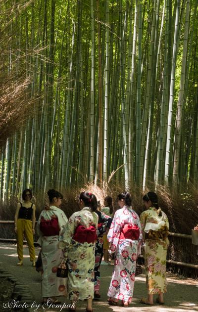 結婚式参列ついでに、猛暑の京都観光(4) 炎天下に嵯峨野を散策