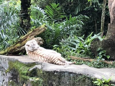 2018 シンガポール5日間⑥ 3日目:シンガポール動物園・ナイトサファリ