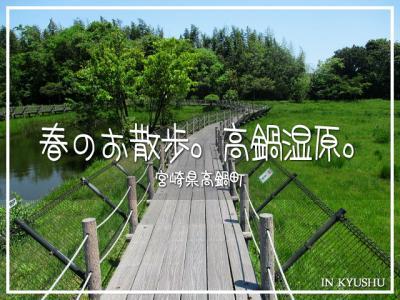 春のお散歩。高鍋湿原。