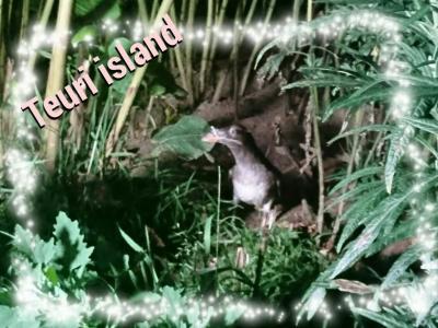 天売島・焼尻島でまったり旅2泊3日♪天売島編【1】