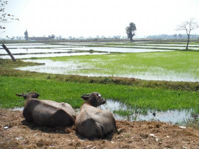 ミャンマー自転車旅その12-古の王都タウングー