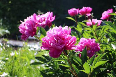 オフシーズンの飯山、寺巡り、花巡りで静かな時を楽しむ。