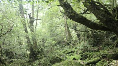 屋久島:白谷雲水峡(苔むす森)  前編