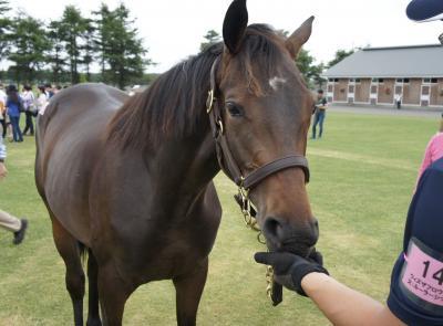 シルクホースクラブ募集馬ツアー