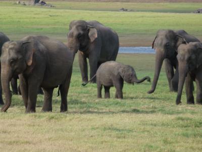 スリランカ・世界遺産とリゾートの旅 Part1
