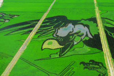 ギネス認定!世界最大の田んぼアートを見に行きました!今年はペルーとのコラボレーション!