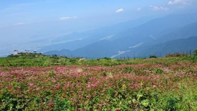 山の日より少し早めの天空のお花畑@伊吹山