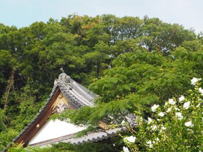 来迎寺 鎌倉で最も美しい仏像が拝観できるお寺さん 鎌倉三十三観音巡り