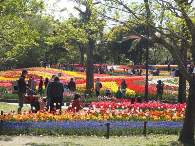 チューリップ祭り@木曾三川公園