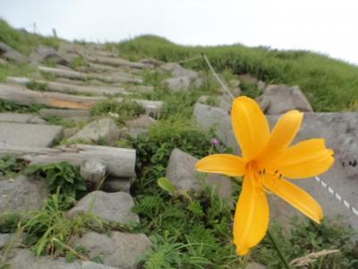 お花の時期の月山に登るのは初めてのnimame/今日もどんな花に会えるか楽しみです♪④