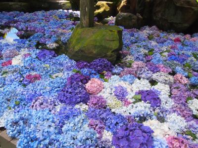 茨城方面へドライブ、最初に寄った雨引観音のあじさい祭りの池に浮かばせた紫陽花が素敵でした