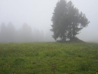 2018・チロルで山歩き、ウイーン・ブタペストで街歩き(その2、初歩きは霧の中)