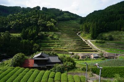 福岡旅行記その3 お茶と棚田と星空と、星野村