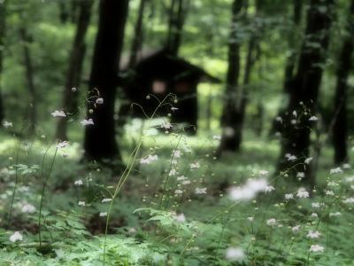 夏旅、たんばらラベンダーパークとレンゲショウマ咲く赤城自然園