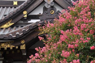 続・鎌倉四季物語【8月】~百日紅と芙蓉咲く古都へ~