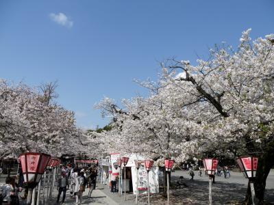 桜めぐり!三嶋大社と身延山を周り、イチゴ狩りも楽しめるバスツアー