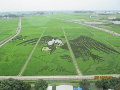 2018年「田んぼアート」in行田・大いなる翼とナスカの地上絵