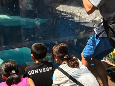 リニューアル上越市水族館良いぞ