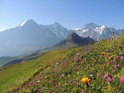 スイス・ユングフラウの旅⑤ ~クリンデルワルト(メンリッヒェン/ファウルホルン)~