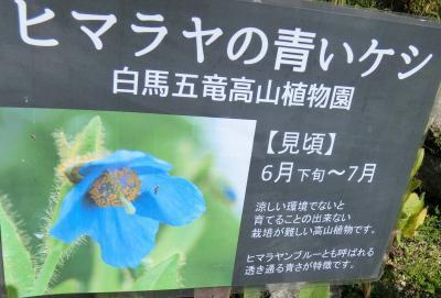 白馬五竜高山植物園 信州山の花を求めて その1
