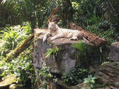 シンガポール家族旅行2   旅行2日目シンガポール動物園