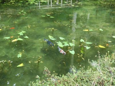 岐阜県関市★モネの池(名もなき池)