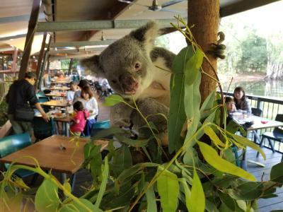 Australia Cairns 動物・山・海☆