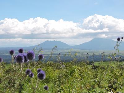 野の花は野に 阿蘇ドライブの旅