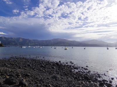 駆け足ニュージーランド南島② ~日帰りツアーで港町アカロアへ