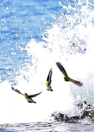 野鳥撮影記録2018年-8月  ②
